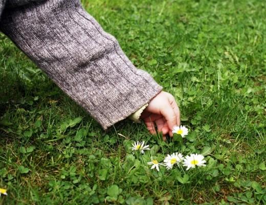 Kinderhand pflückt Gänseblümchen