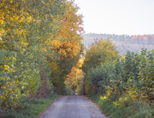 Location Waldweg Herbst