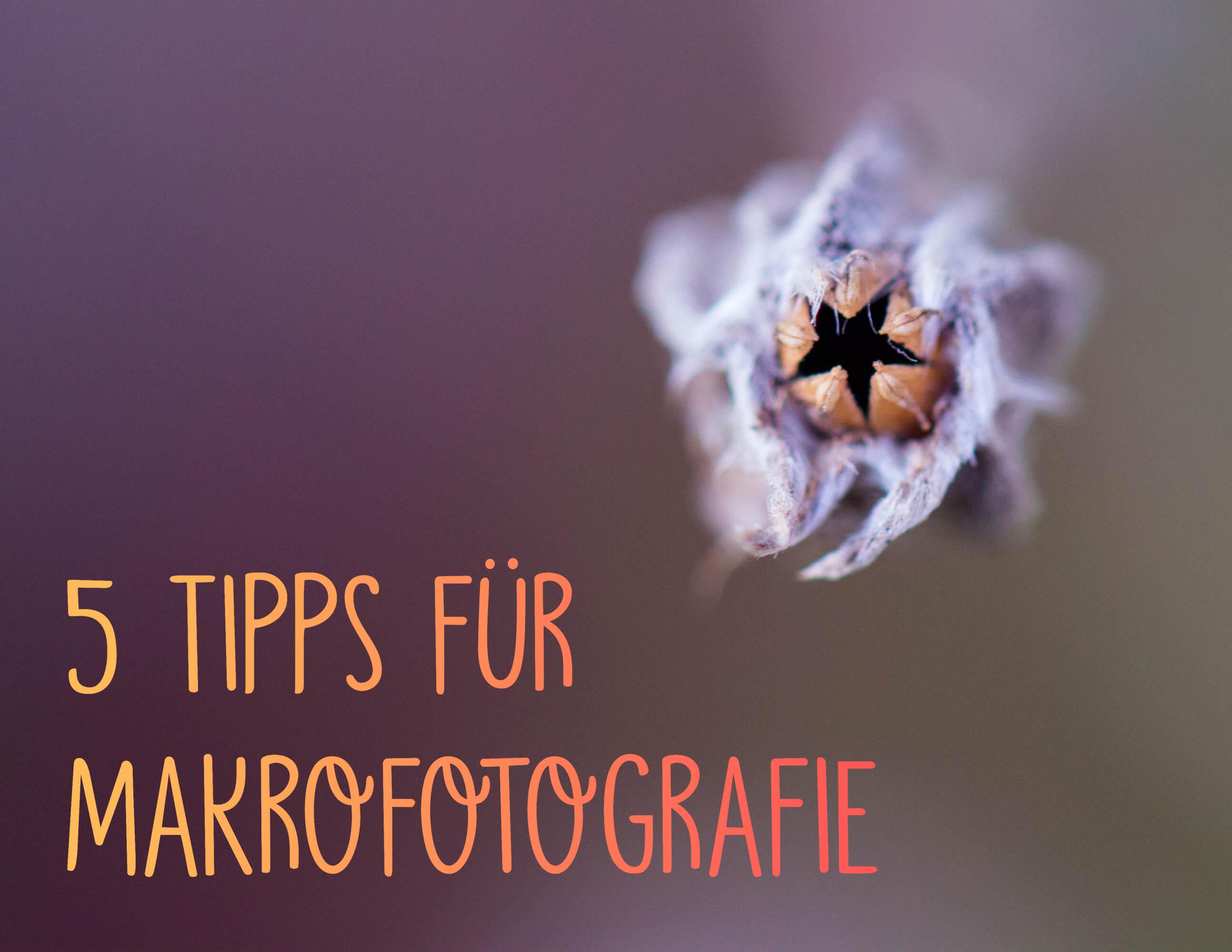 Makrofotografie 5 Tipps