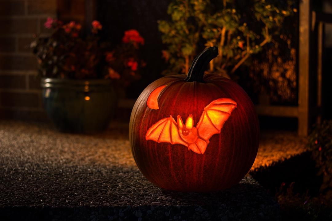 Halloween Kürbis Feldermaus