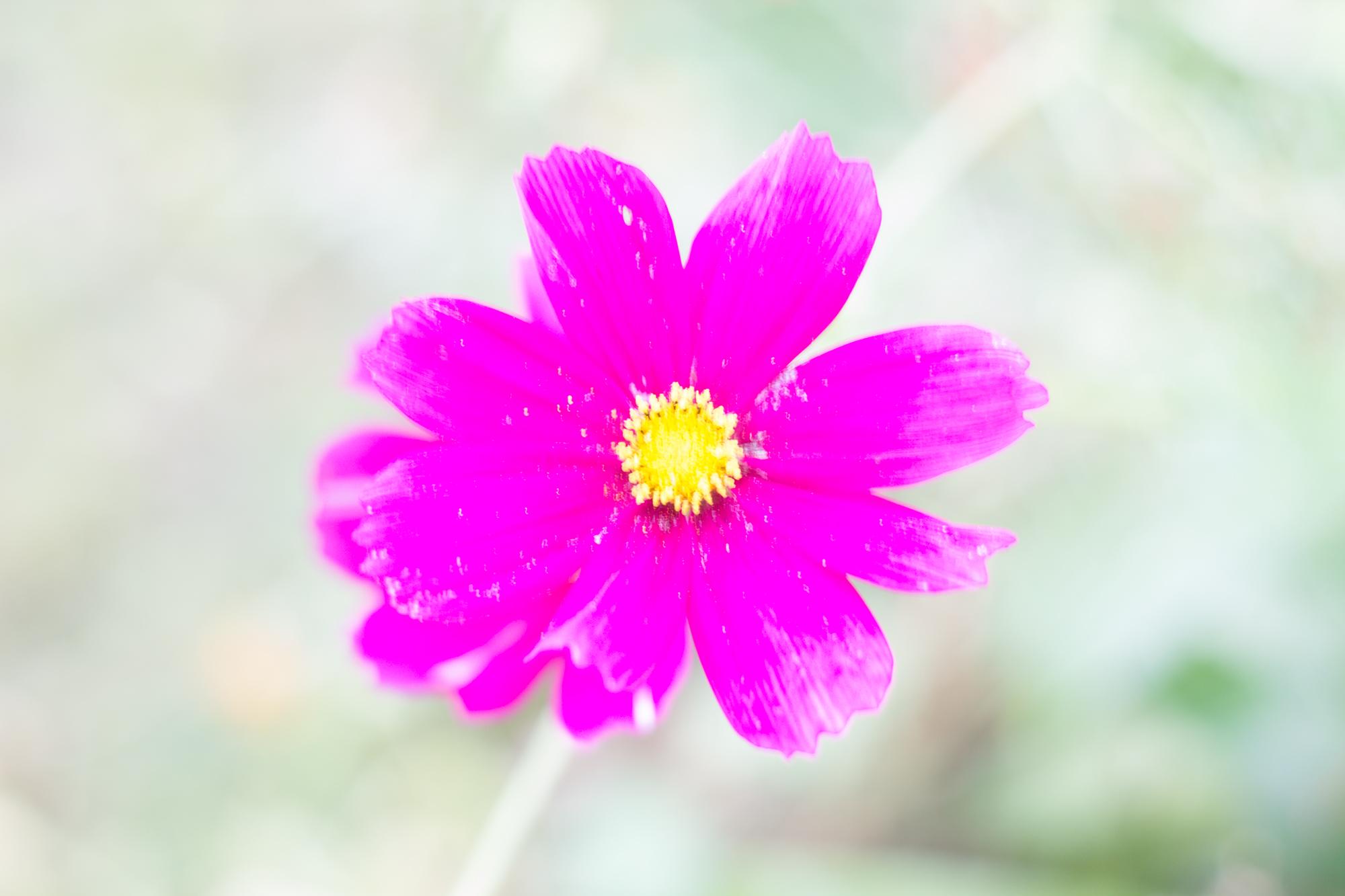 Blume Überbelichtete