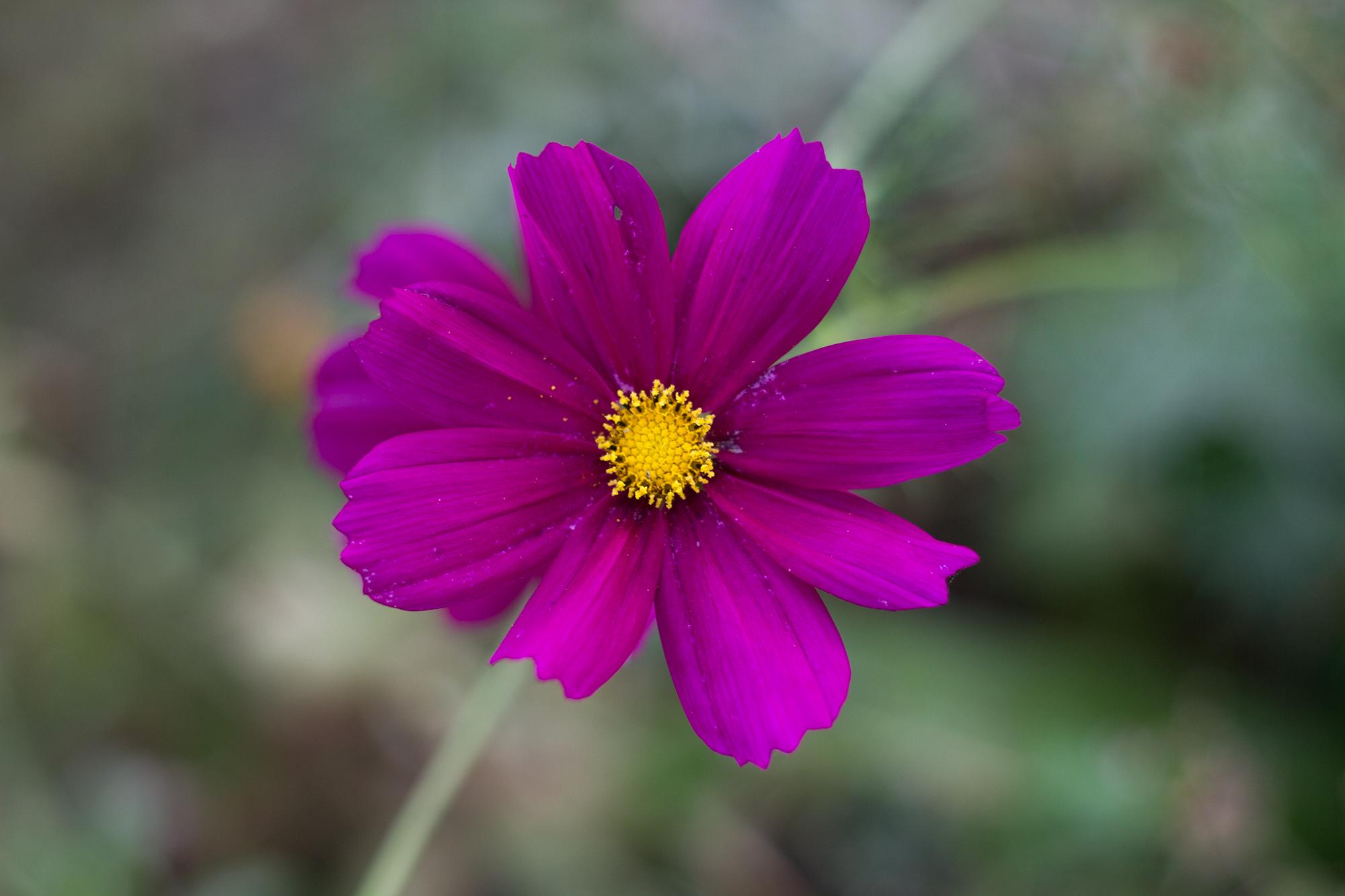 Blume normal belichtete