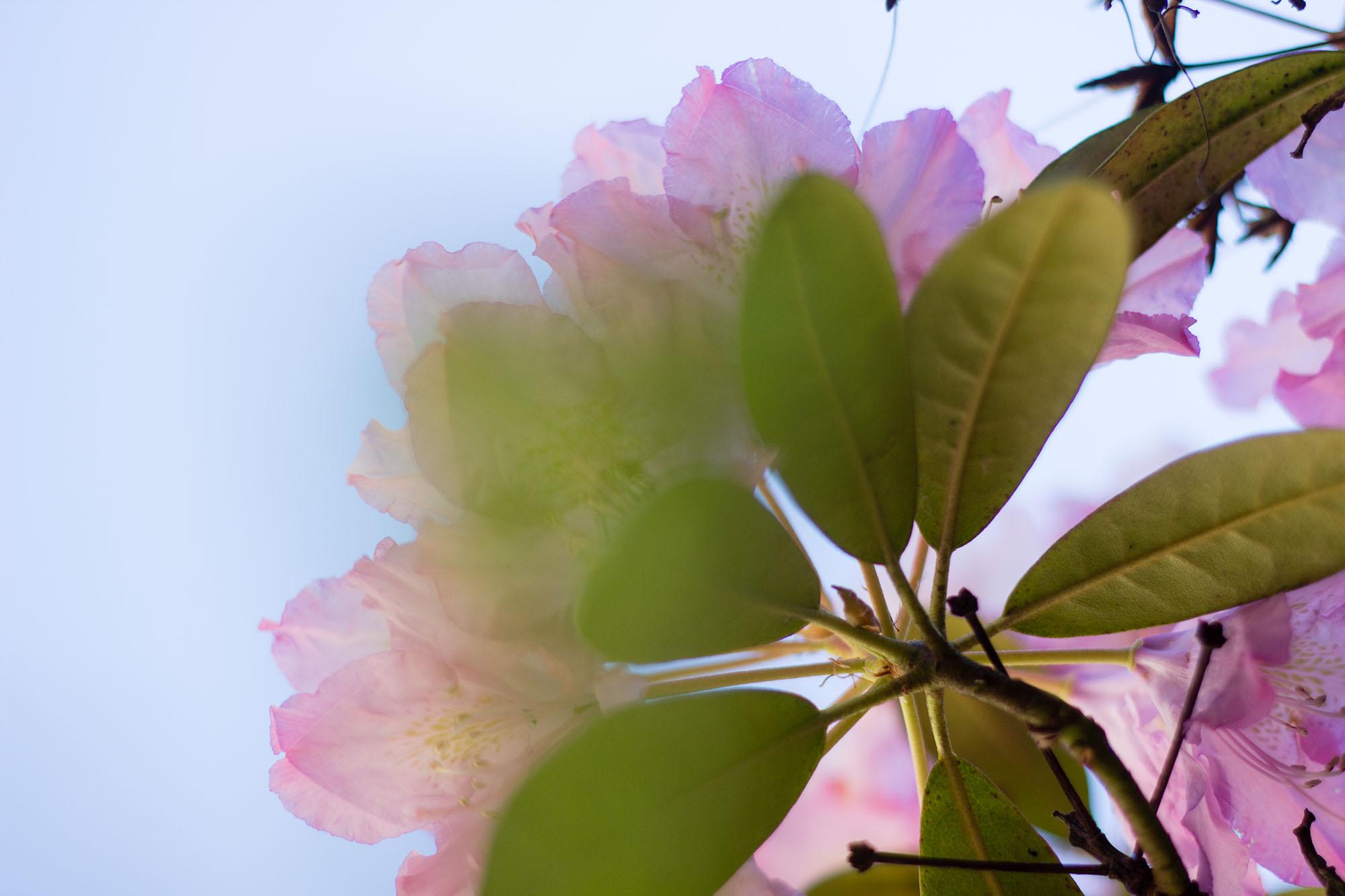 Blumen Busch Froschperspektive