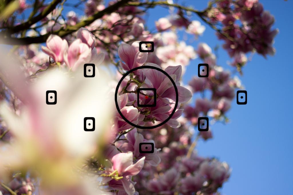 Fokuspunkt Blick durch Sucher_4267