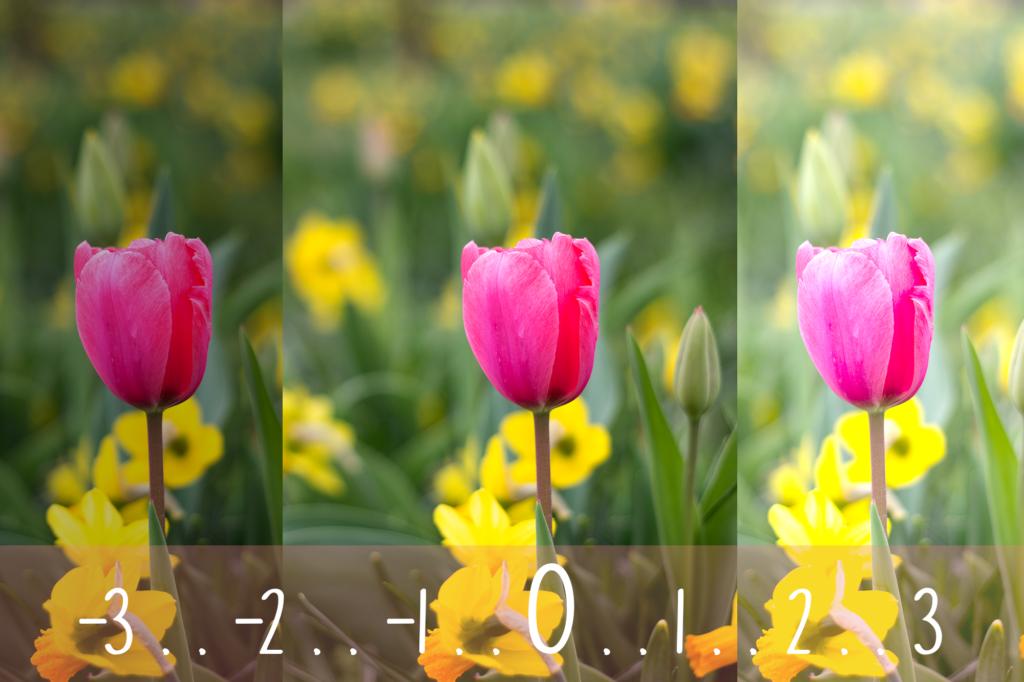Tulpe Belichtungskorrektur