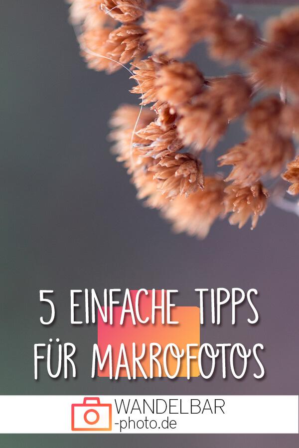 5 einfache Makrofotografie-Tipps für Einsteiger